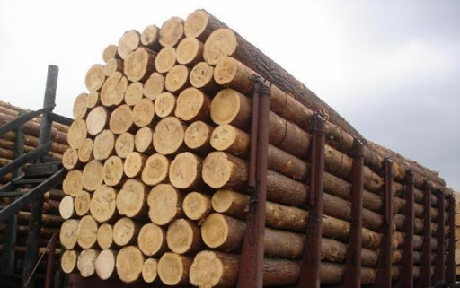 SELL: EXOTIC WOODEN LOGS