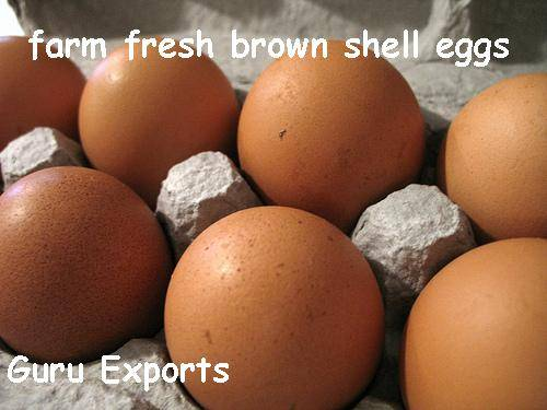Chicken Eggs Farming, Poultry Egg Production, Farm Eggs Exporters India