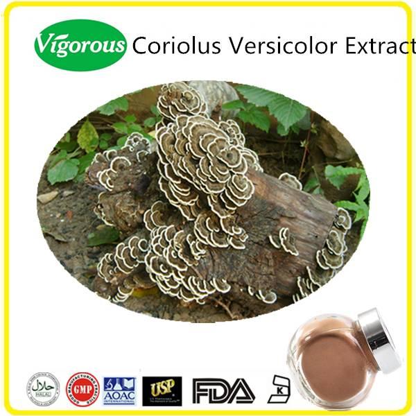 GMP Manufature Trametes Versicolor Extract/ Pure Natural Coriolus Versicolor Powder/Free sample Kres