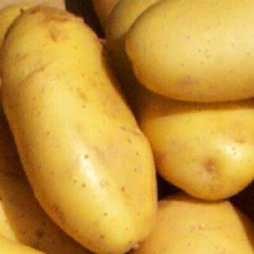 Export Fresh Potato