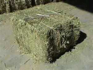 Alfalfa Hay in Bale.