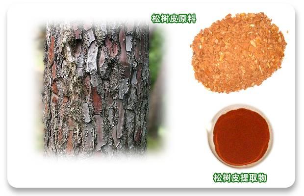 Pine bark P.E, hot sell