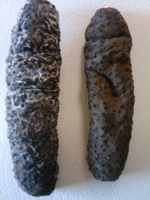 dried sea cucumber