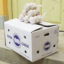 Pure White Garlic For Sale
