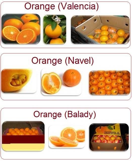 Class 1 Fresh Valencia orange