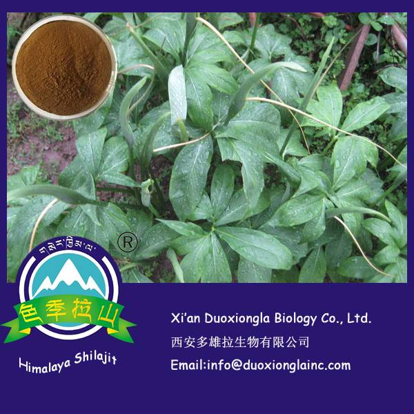 Rhizoma Arisaematis Extract