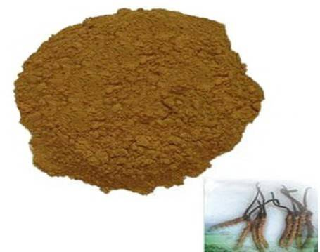 Cordyceps powder, from GMP Standard factory