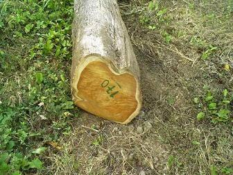 Colombia teak logs