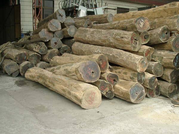 Tan Green Paper cut logs