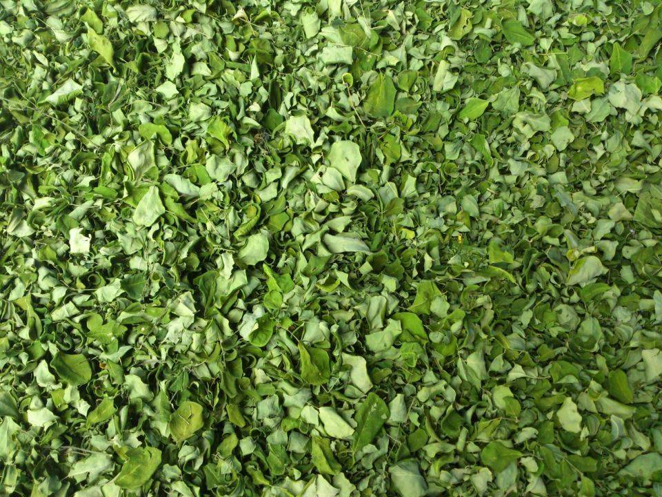 Nutritional Moringa Dry Leaves Exporters