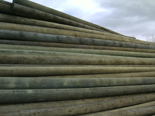 Pine poles for electrical and telocomunication networks