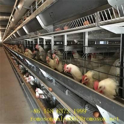 hen cages_shandong tobetter preferential benefit