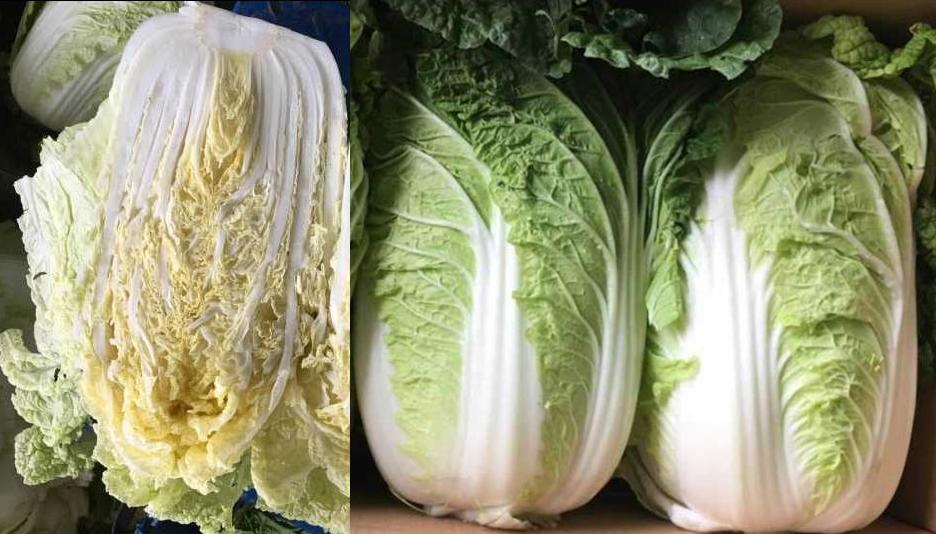 fresh celery cabbage