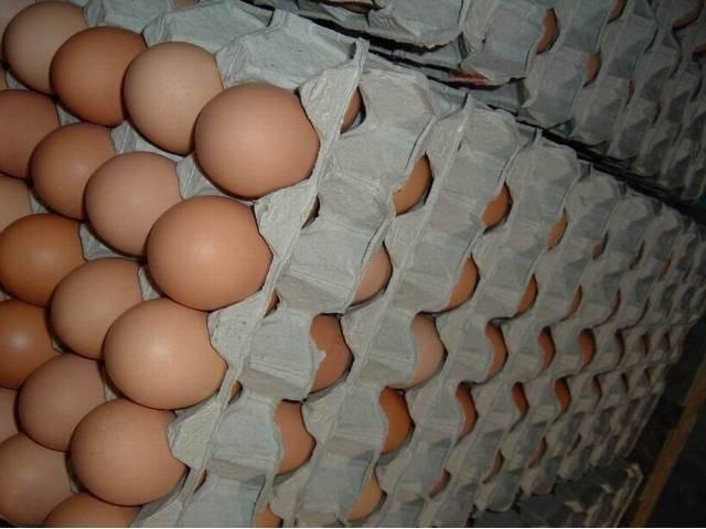 Farm Fresh Chicken Brown & White Table Eggs