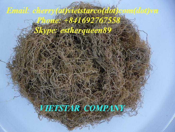 WE SUPPLY DRIED GRACILARIA SPP SEAWEED