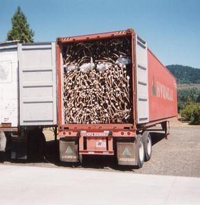 Elk Antlers & Deer Antlers (Deer Horn): 20' & 40' container shipments available