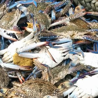 Fresh Blue Swimming Crabs