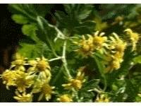 Botanical Extracts(Anti bacteria)