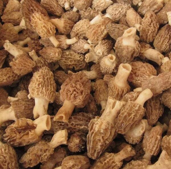 Frozen mushroom Fungus Morchella Esculenta
