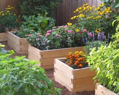 Wood Garden Planting Beds