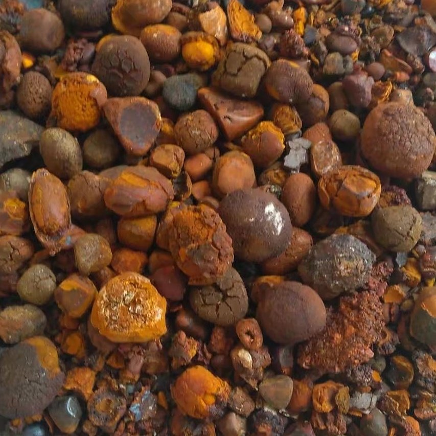 Ox,Cow,Cattle, Gallstones