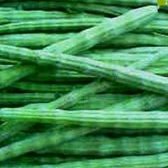 How to plant moringa /Moringa oliefera