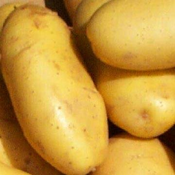 Diamond and Belgium Potato for sell