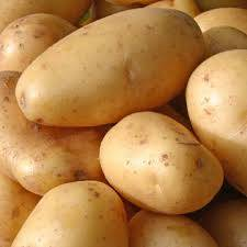 Fresh Holland Potato For Sale