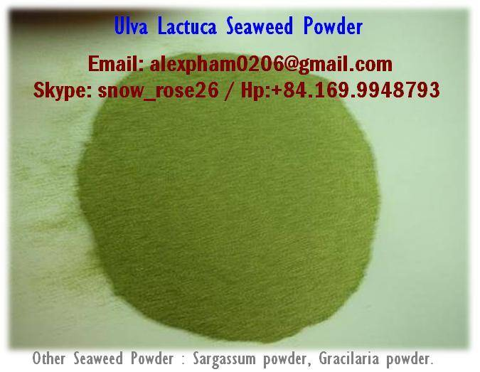 Sargassum Powder, Gracilaria Powder, Ulva Lactuca Seaweed Powder