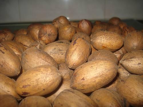 Selling Pecan nuts