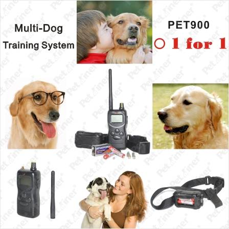 1000M waterproof and Rechargeable Pet Dog Training Collar