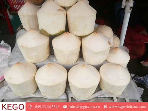 Best price Coconut from Vietnam