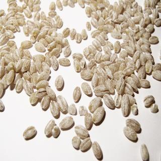 Barley from Ukraine