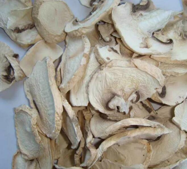 Dried mushroom Fungus Champignon Mushroom