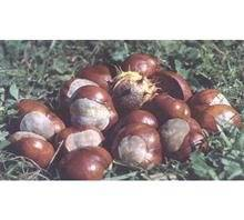 Horse chestnut P.E. -Aescin