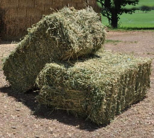 alfalfa hay for animal feed