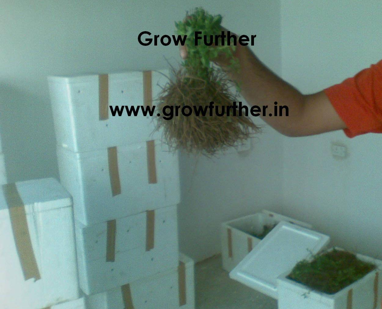 Medicinal crop farming - planting maerial seeds/plants available