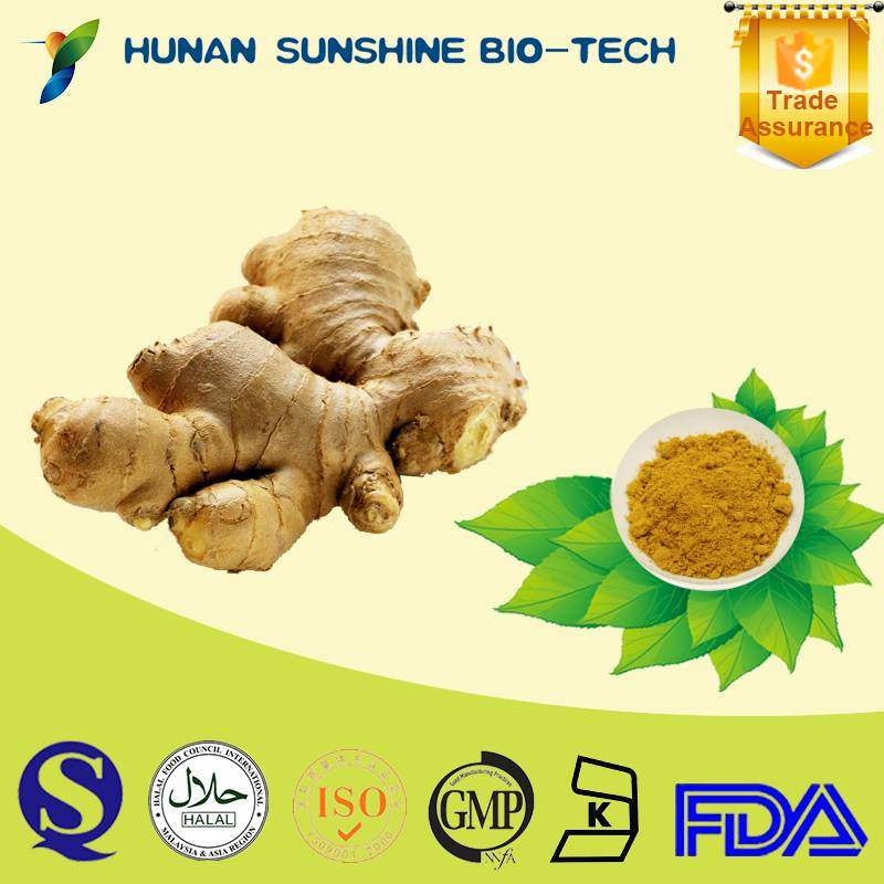 Supply Natural 5% Gingerols Pharmaceutical Grade Ginger Extract