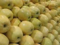 Fresh Golden Golden delicious Apple for sale