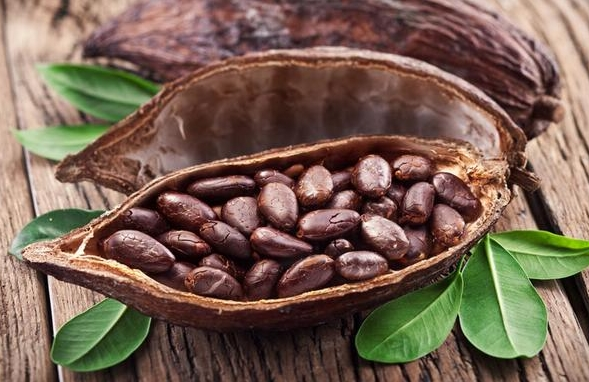 buy cocoa bean and cocoa powder