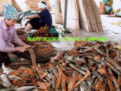 CASSIA - STAR ANISEED supplier from VIETNAM
