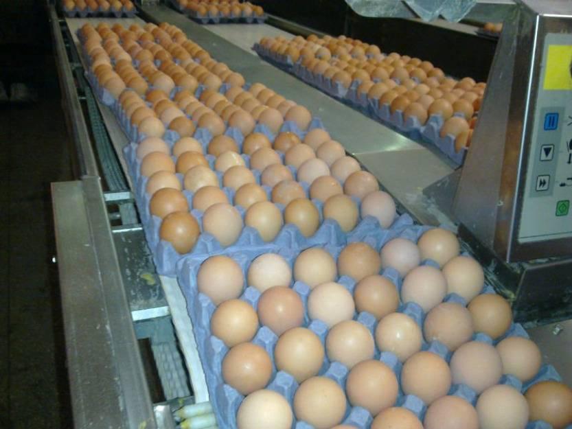 Fresh White Eggs and Fresh Brown Eggs