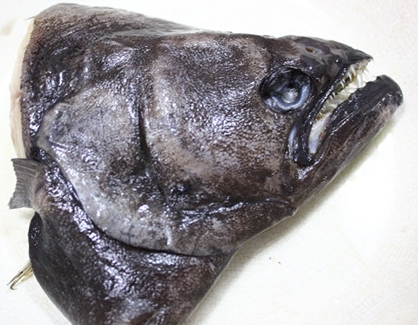 purchase head of halibut