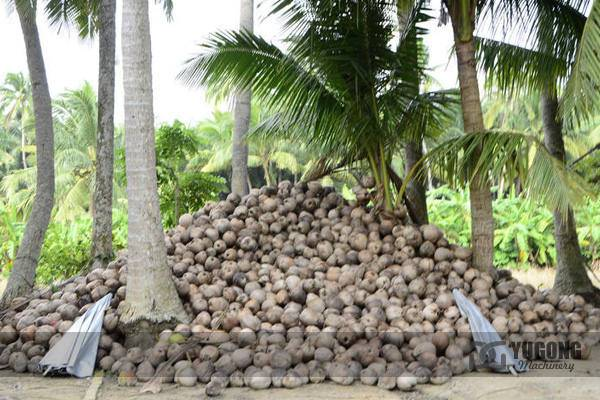 Pellet Machine for Coconut Shell in stock