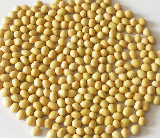 100% Natural (GMP ISO) 40% Soy isoflavones