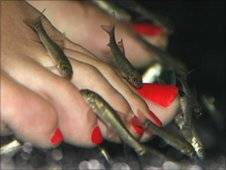 Doctor Fish Garra Rufa Fish Pedicure Spa