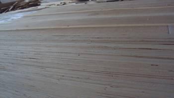 paulownia glued panel