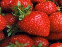Fresh Strawberry Competitive Price