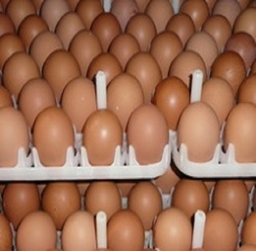 white and brown chicken eggs/fresh table eggs
