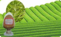Sell High Quality 100% Natural Green Tea Extract